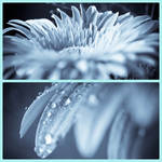 In blue by rainman65