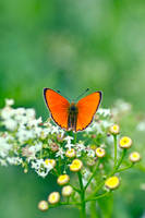 Im the orange one by rainman65