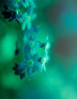 Dreaming green by rainman65
