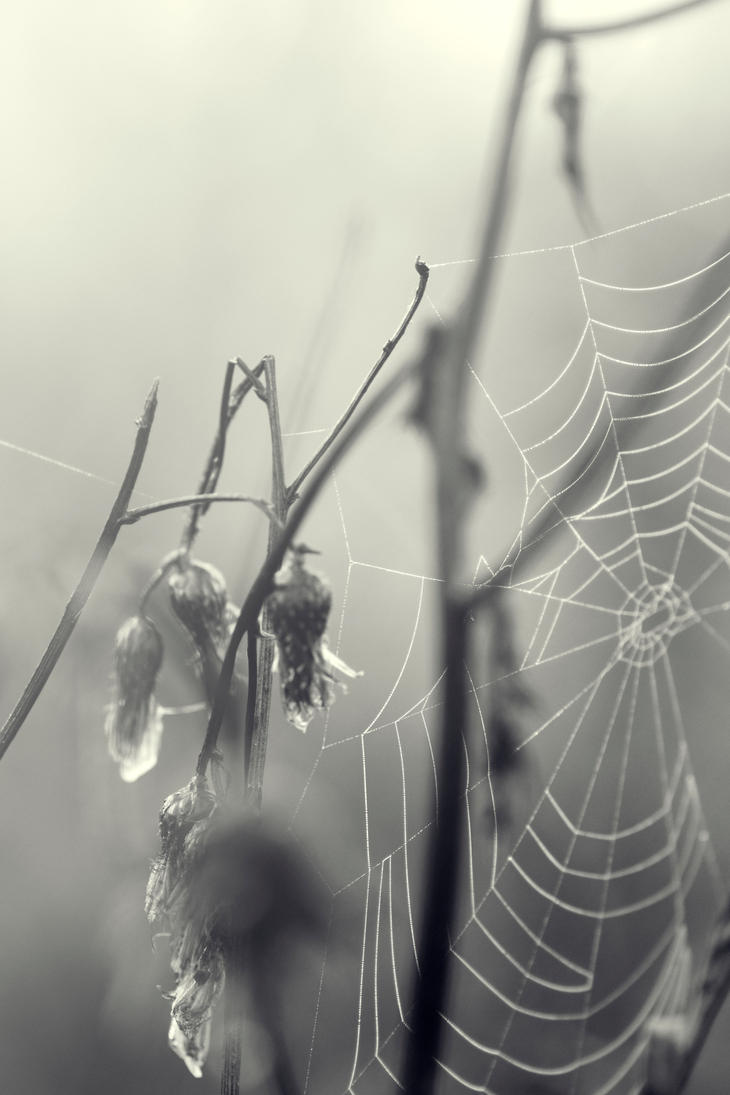 In shadows spiders sleep by rainman65