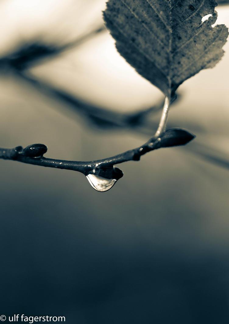 Last by rainman65