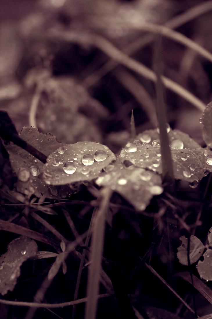 November rain 6 by rainman65