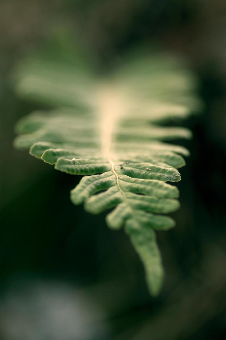 Magic green by rainman65