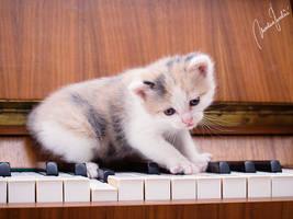 'Beethoven'