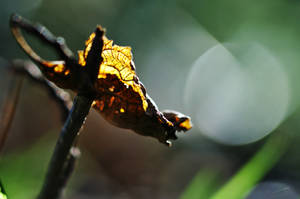 Leaf by Ikarusthefirst