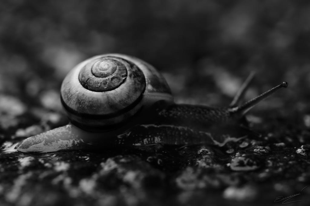 Snail by Ikarusthefirst