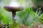 Mushroomtale