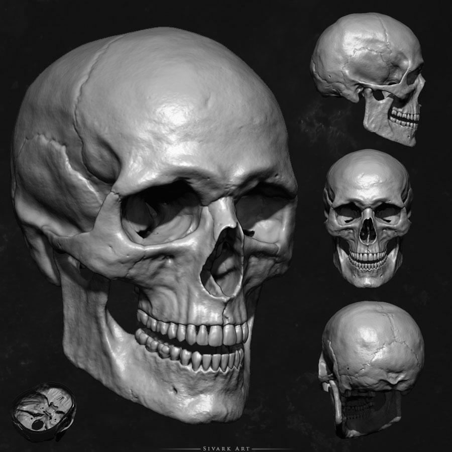 human skull by sivarkart on deviantart