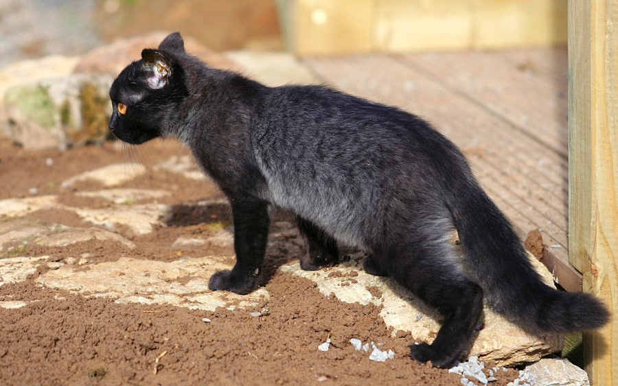 Black Panther By Portela On Deviantart: Black Panther By Czertice On DeviantArt