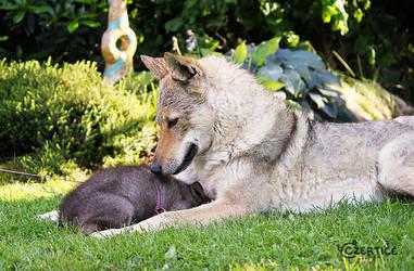 Wolfish Santcuary