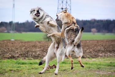 Kung-Fu Wolfdogs