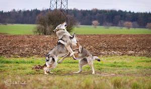 Kung-Fu Wolfdogs IV.