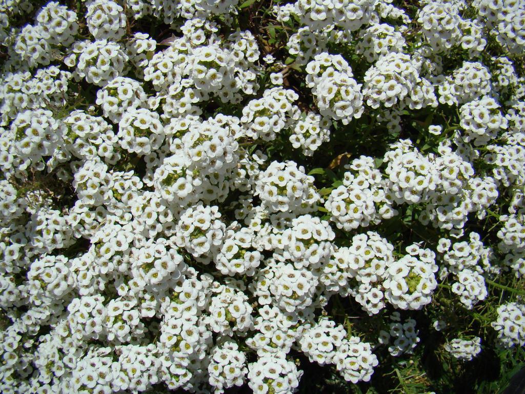 Little white flowers by emmal27 on deviantart little white flowers by emmal27 mightylinksfo