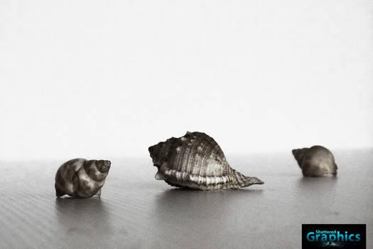 Digital Art (Shells)