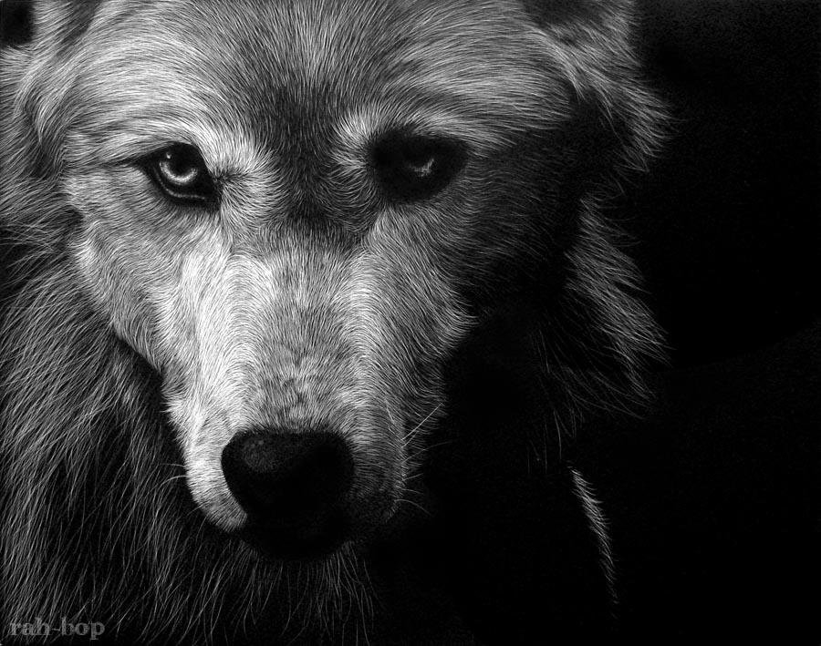 Scratchboard wolf by rah-bop