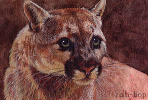 Cougar by rah-bop