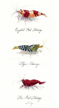Three shrimp