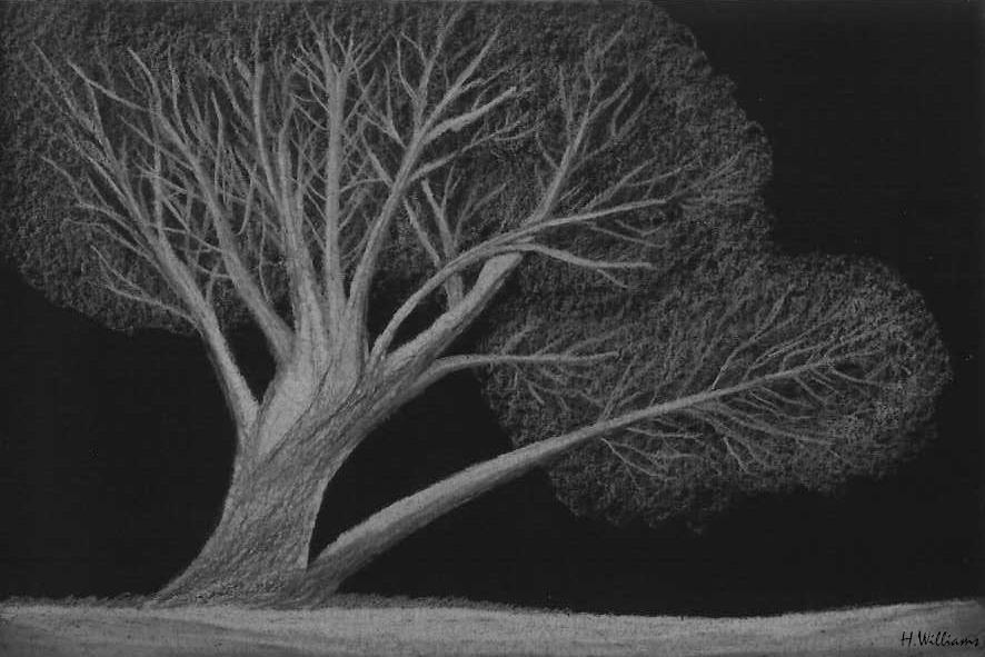 Tree by 12jack12