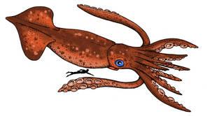 Cryptozoologicon - Big-sucker Squid
