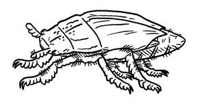 Magestone Collab - Hurrum Beetle