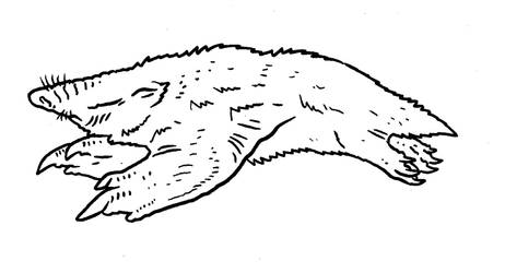 Beneath Skull Island - Speotalpicterus