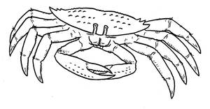 Prehistoric Monsters - Giant Enemy Crab