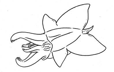 Cephtember - Butterfly Snapper