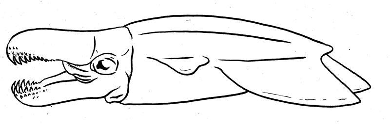Cephtember - Burred Snapper