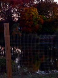 Autumn Scene (9550)