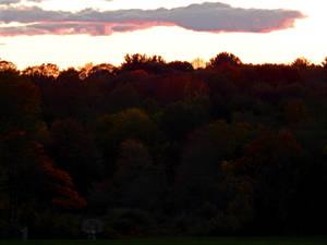 Autumn Scene (9518)