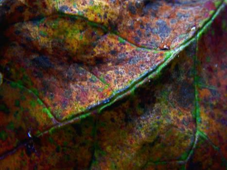 Rainbow Leaf (9294)