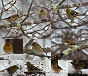 Winter Birds Feb 12th