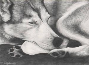 Sleeping Beauty by Wildphoenix22