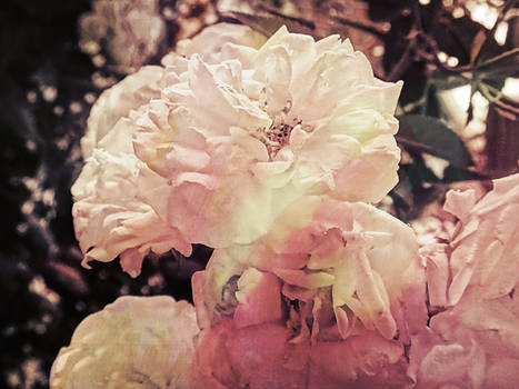 Moi petit fleur