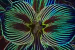 Neon Amaryllis