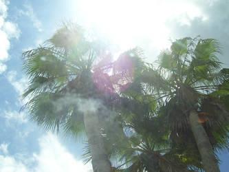 Through the Palms... by richardperkins