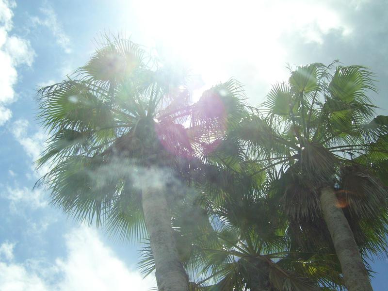 Through the Palms...