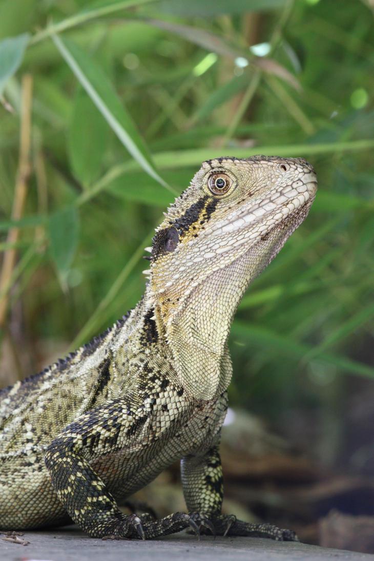 Lizard2 by Pyro-sk8iac