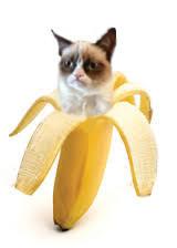 Grumpy Cat Bananya