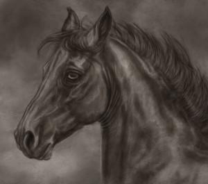 blackseagull's Profile Picture