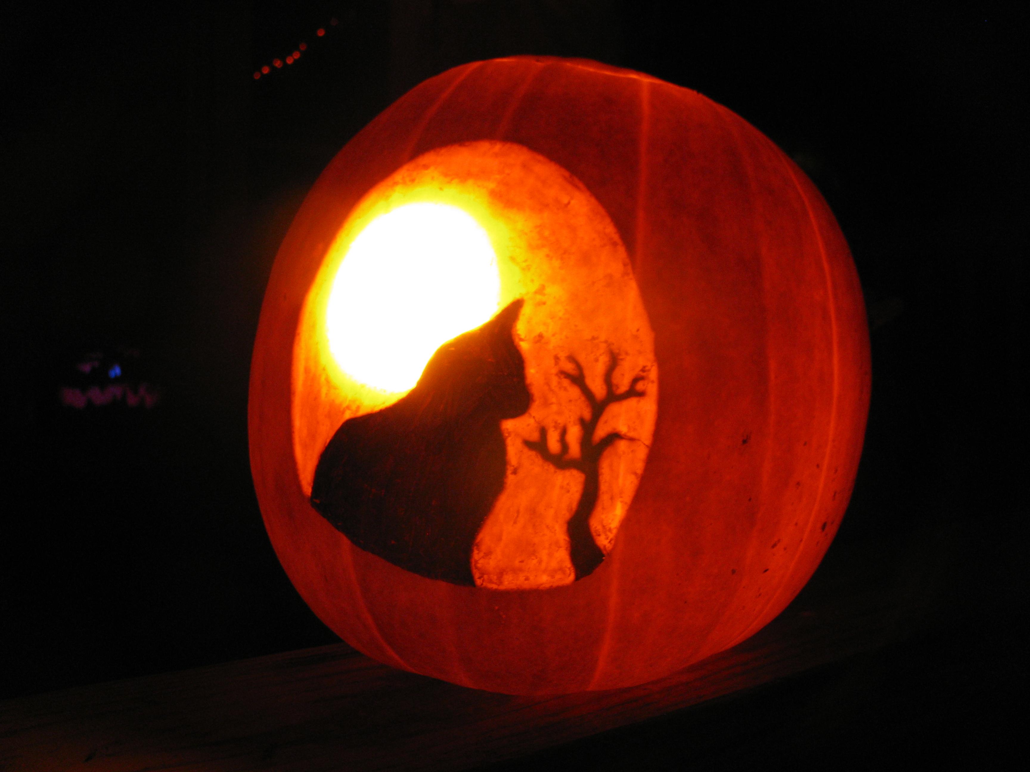 Cat in moonlight by pumpkin crazy on deviantart