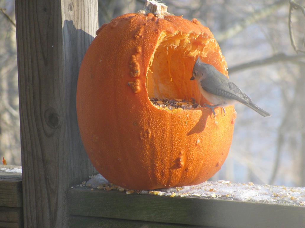 Кормушки своими руками для птиц желатин