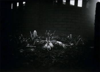 Pinhole Flowers by Wilhelmina-vanRoyen