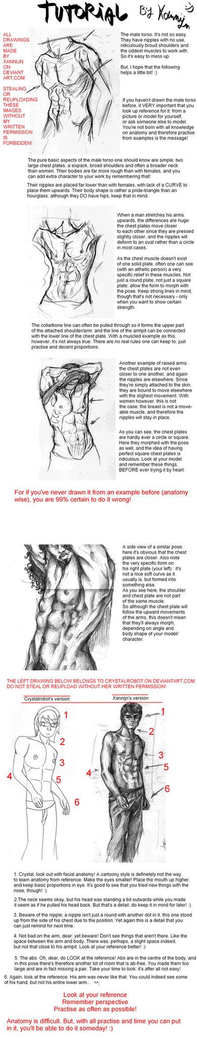Male torso tutorial by Xannijn on DeviantArt