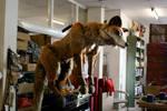 Fox puppet..hung