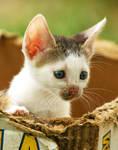 Homeless Kitty