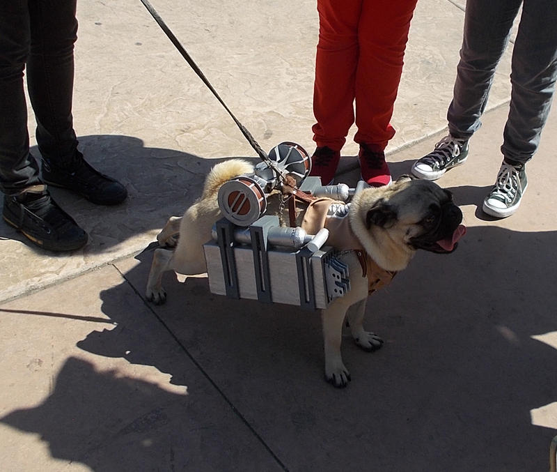 Shingeki no Kyojin Pug Cosplay Ver. by nagic-nilo