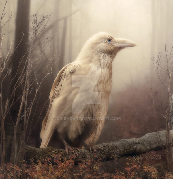 White Whild Raven Printable by CindysArt