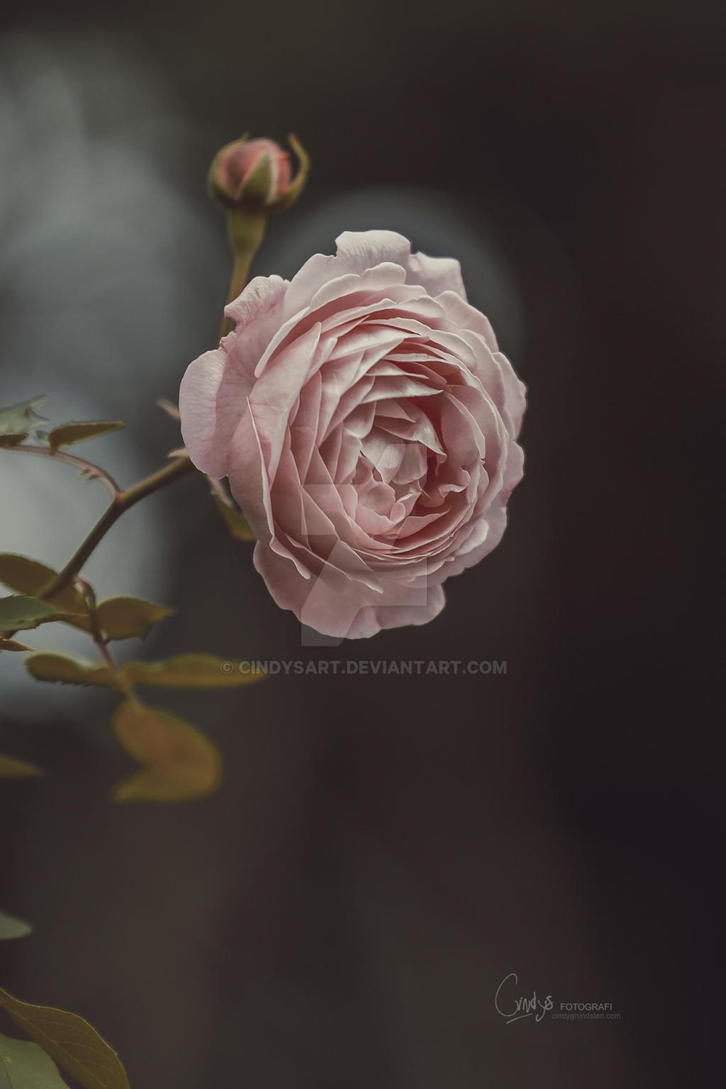 Romance by CindysArt