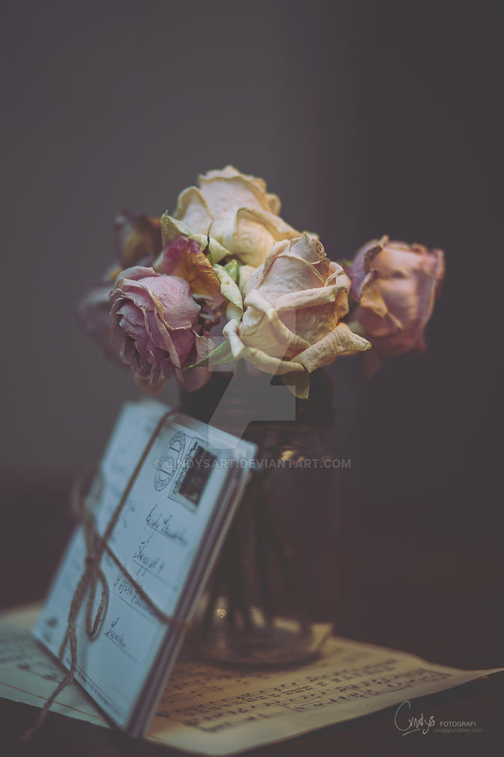 Dried roses by CindysArt